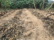 Terreno novo plantio